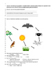 Food chains, energy pyramids, and food web test