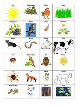 Food web animal cards, coding, and questions