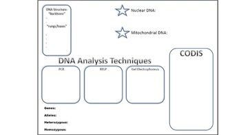 Forensic DNA Analyis Notes / Graphic Organizer