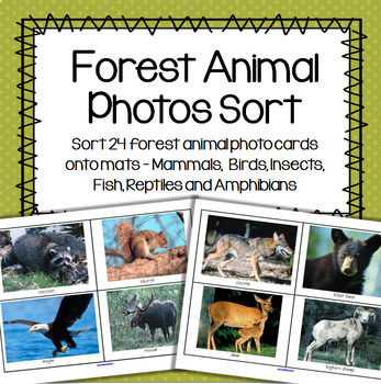 Forest Animals Photos Sort