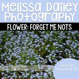 Forget Me Nots Photograph