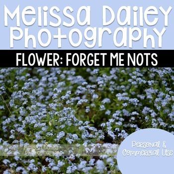 Forget Me Nots Photograph
