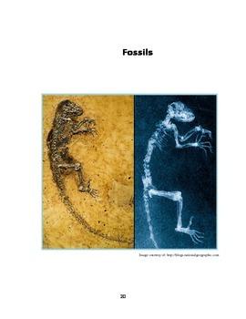Fossil Frenzy!