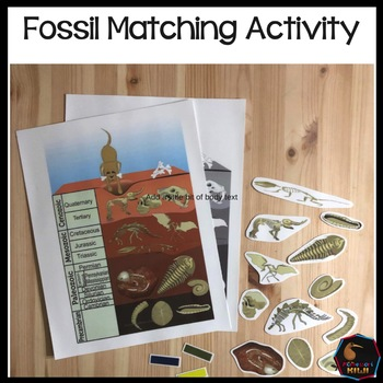 Fossil matching activity