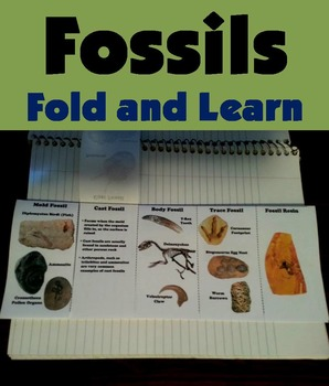 Types of Fossils Interactive Notebook Activity/ Foldable (
