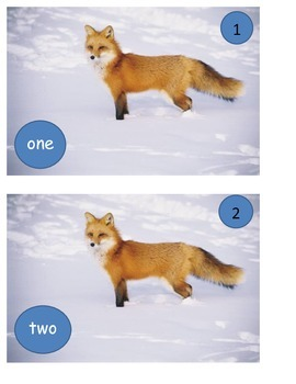 Fox socks GOOD DOCTOR in snow words and numbers ESL one to