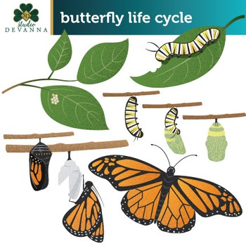 Free Butterfly Life Cycle Clip Art