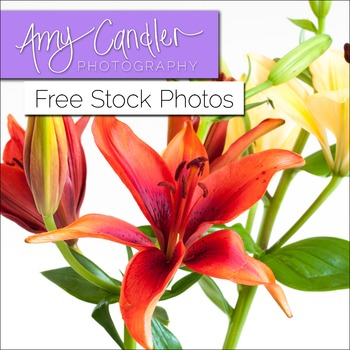 Free Yellow & Red 'Lily' Flower Stock Photos