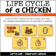 The Life Cycle of a Chicken Graphic Organizers and Writing