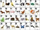 French Animal - Les Animaux Vocabulary Teaching Posters Po