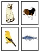 French Animals-Les Animaux Flashcards and Fun Activities
