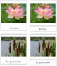 French - Aquatic and Wetland Plant Cards