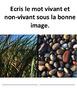 French: Les choses vivantes/non-vivantes, Cartes éclairs,