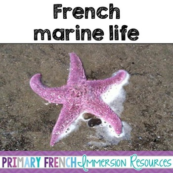 French Marine Life/Animals - Flashcards and games - La vie marine