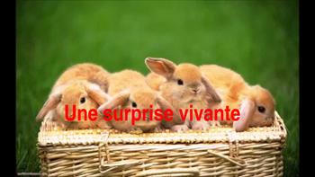 """French: Reading:Pâques: """"Une surprise vivante"""", lecture PRIMARY"""