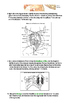 Frog Dissection Lab Directions and worksheet