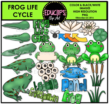 Frog Life Cycle Clip Art Bundle {Educlips Clipart}