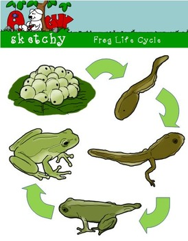 Frog Life Cycle Clipart, Graphic 300dpi Color Grayscale BW