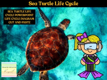 From Beach to Sea: The Life Cycle of a Sea Turtle: Presentation