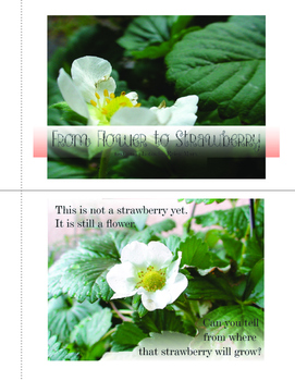 From Flower to Strawberry Photo Book