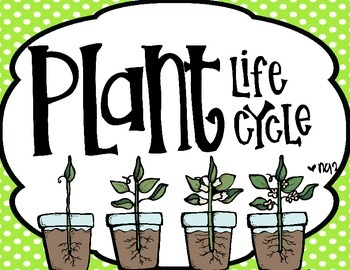 See How They Grow........ The Life Cycle of Plants and Pla