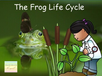 From Water to Land: The Life Cycle of a Frog