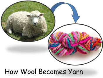 """From Wool to Yarn Nonfiction PowerPoint """"Book"""" for First o"""