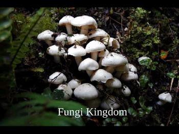 Fungi cloze