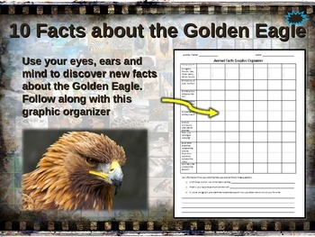 GOLDEN EAGLE: 10 facts. Fun, engaging PPT (w links & free