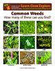 Garden Based Lesson – Weeds