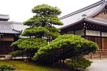 Garden - Kyoto - Japan