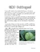 Genetics: Genetically Modified Cabbages