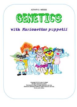 Genetics Activity 3: Meiosis