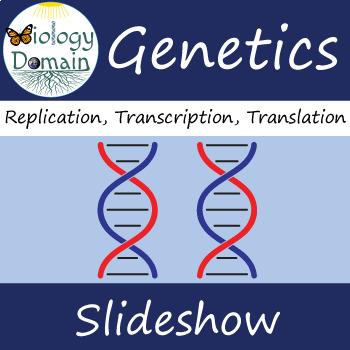 Genetics: DNA Replication, Translation, and Transcription