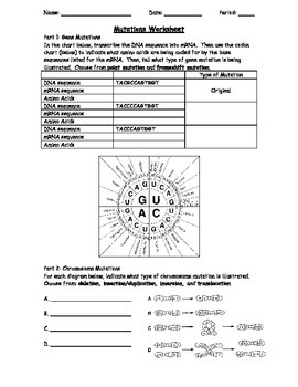 Genetic Mutations Worksheet Using a Codon Chart by The Biotic ...