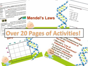 Genetics:  Notes and Activities for Mendel's Laws