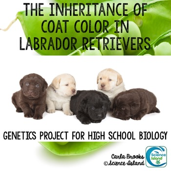 Genetics Project - The Inheritance of Coat Color in Labrad