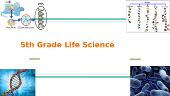 Georgia Milestone GMAS 5th Grade Science Review Life Science