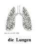 German Body Parts Flashcards