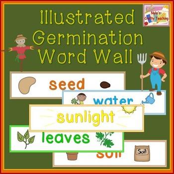 Germination Word Wall