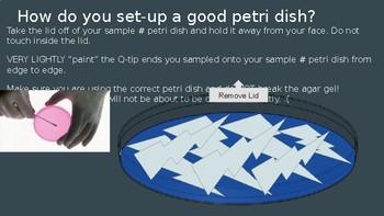 Germs Everywhere Petri Dish Sampling Lab & Hand-washing Ge
