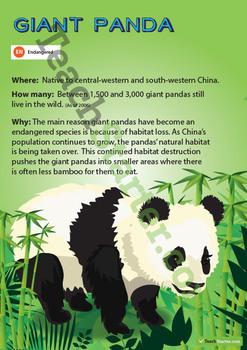 Giant Panda Endangered Animal Poster