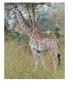 Giraffe Word Search