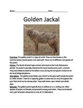 Golden Jackal - lesson review article facts information qu