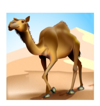 Grade 3 Module 1 My Librarian is a Camel Unit 1