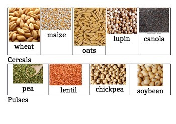 Grain discovery - sorting cereals and pulses