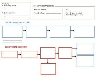 Graphic Organizer: Overview of Circulatory System
