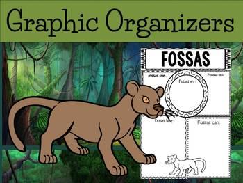 Graphic Organizers: Fossas / The Fossa - Oceania Animals :