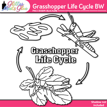 Grasshopper Life Cycle Clip Art {Great for Animal Groups &