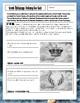 Greek Mythology Worksheet: Gods and Goddesses